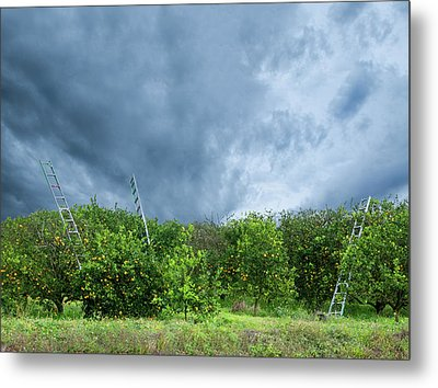 Metal Print featuring the photograph Orange Tree by Carolyn Dalessandro