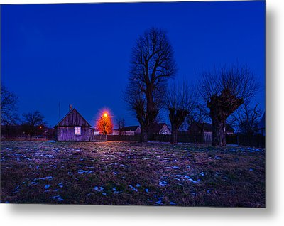 Metal Print featuring the photograph Orange Tree by Dmytro Korol