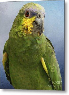 Orange Wing Amazon Parrot Metal Print