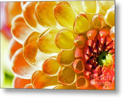 Oranges And Lemons Metal Print