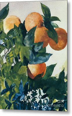 Oranges On A Branch Metal Print by Winslow Homer