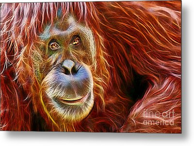 Orangutan Collection Metal Print