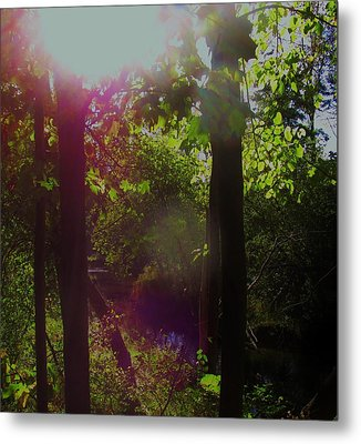 Orbs In The Forest Metal Print
