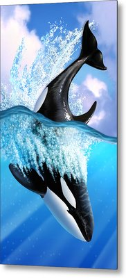Orca 2 Metal Print