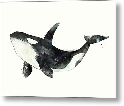 Orca From Arctic And Antarctic Chart Metal Print by Amy Hamilton