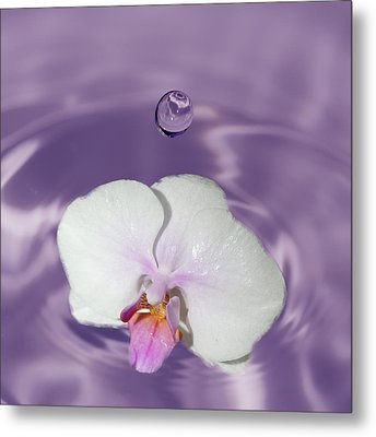 White Orchid Water Drop Metal Print