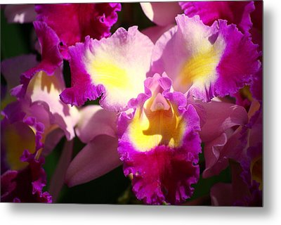 Orchid 1 Metal Print by Marty Koch