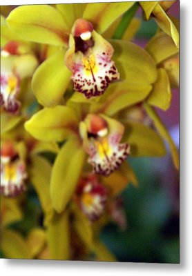 Orchid 11 Metal Print by Marty Koch