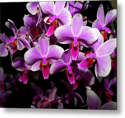 Orchid 12 Metal Print by Marty Koch