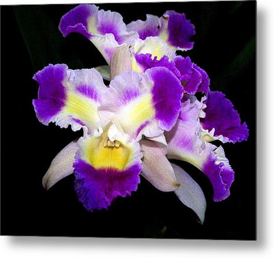 Orchid 13 Metal Print by Marty Koch