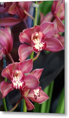 Orchid 14 Metal Print by Marty Koch