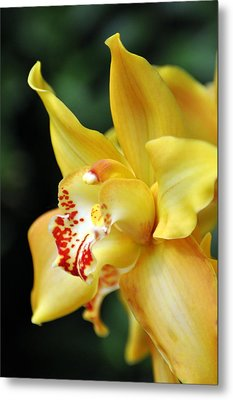 Orchid 24 Metal Print by Marty Koch