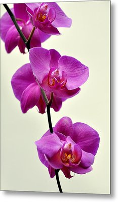 Orchid 26 Metal Print by Marty Koch