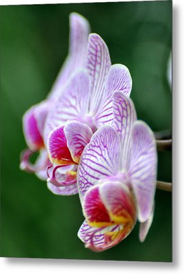 Orchid 30 Metal Print by Marty Koch