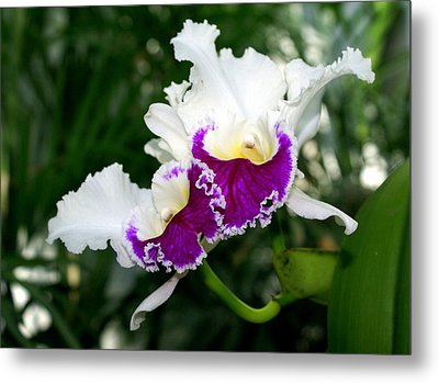 Orchid 6 Metal Print by Marty Koch
