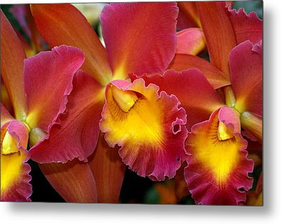 Orchid 8 Metal Print by Marty Koch