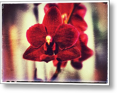 Metal Print featuring the photograph Orchid Alone by Isabella F Abbie Shores FRSA