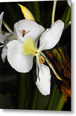 Orchid And Friend Metal Print