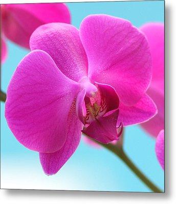 Orchid At The Ocean Closeup Metal Print by Michi Sherwood