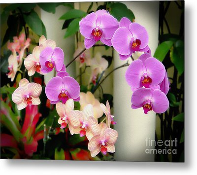 Metal Print featuring the photograph Orchid Beauties by Sue Melvin