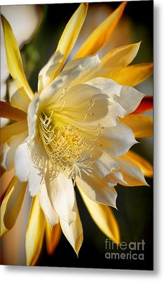 Orchid Cacti Beauty Metal Print by Mariola Bitner