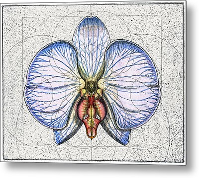 Orchid Metal Print by Charles Harden