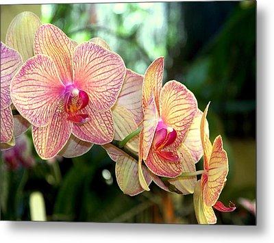 Orchid Delight Metal Print by Karen Wiles