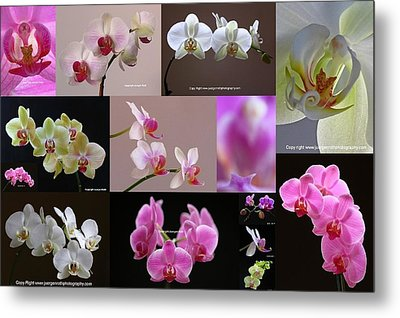 Orchid Fine Art Flower Photography Metal Print by Juergen Roth