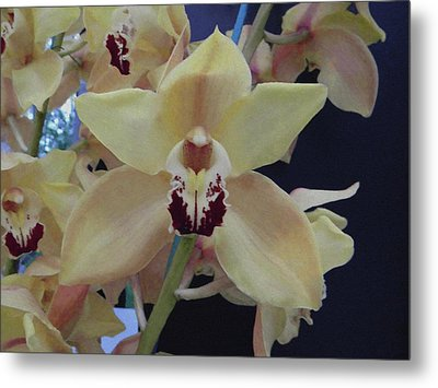 Metal Print featuring the photograph Orchid Impression by Manuela Constantin
