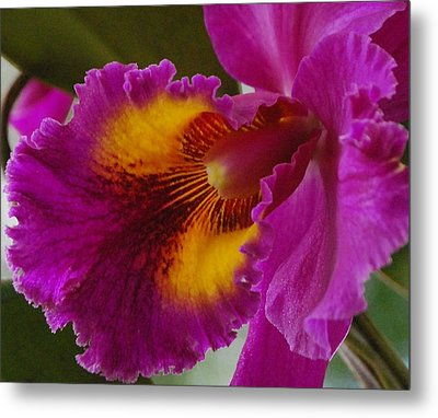 Metal Print featuring the photograph Orchid In The Wild by Debbie Karnes