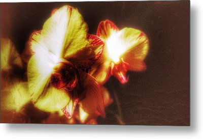 Metal Print featuring the photograph Orchid by Isabella F Abbie Shores FRSA