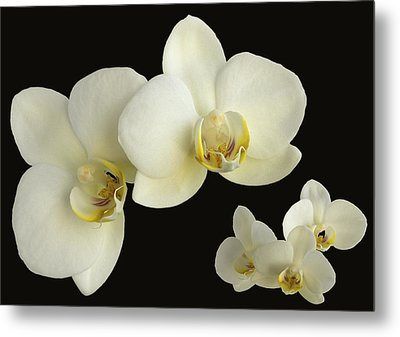 Orchid Montage Metal Print