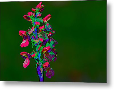 Orchid Metal Print by Richard Patmore