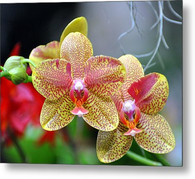 Orchids 35 Metal Print by Marty Koch