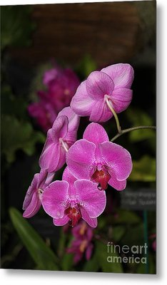 Orchids Alicia Metal Print