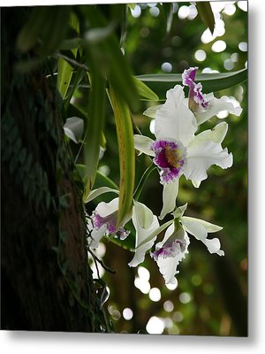 Orchids Metal Print by Deborah Molitoris