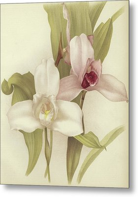 Orchids Metal Print by English School