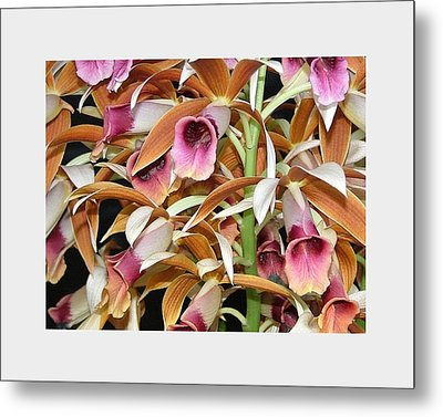Orchids In Bloom Metal Print by Mindy Newman