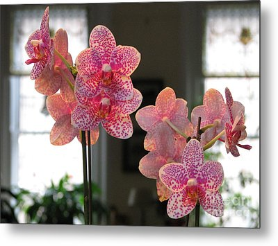 Metal Print featuring the photograph Orchids In The Parlor by Erik Falkensteen
