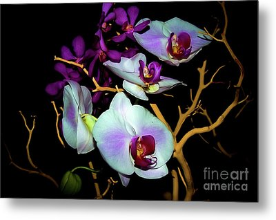 Metal Print featuring the photograph Orchids In Water Color by Diana Mary Sharpton