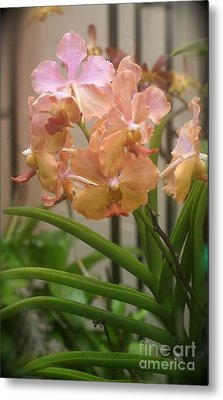 Metal Print featuring the photograph Orchids Peach by The Art of Alice Terrill