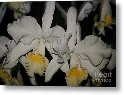 Metal Print featuring the photograph Orchids Satin by The Art of Alice Terrill