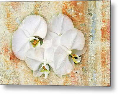 Orchids Upon The Rough Metal Print by Andee Design