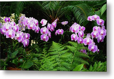 Orchids With Fern-panoramic Metal Print by Margie Avellino