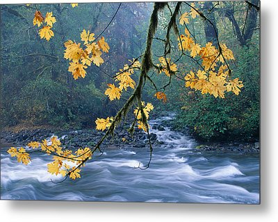 Oregon, Cascade Mountain Metal Print by Carl Shaneff - Printscapes