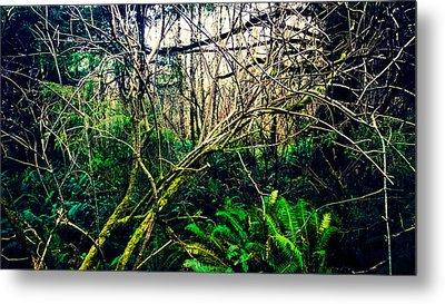 Oregon Rainforest II Metal Print
