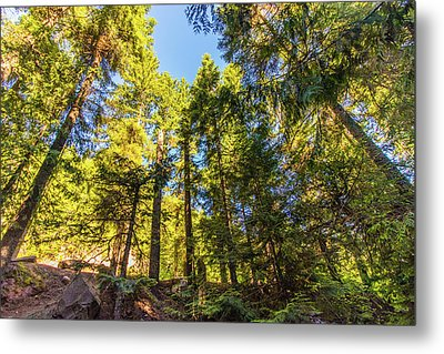 Metal Print featuring the photograph Oregon Trees by Jonny D