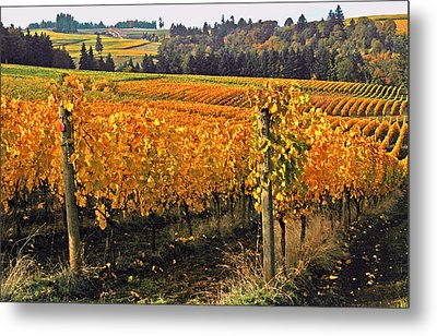 Oregon Wine Country Metal Print