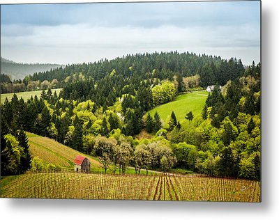 Oregon Wine Country Metal Print by TK Goforth