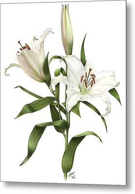 Oriental Lily Siberia Metal Print by Artellus Artworks